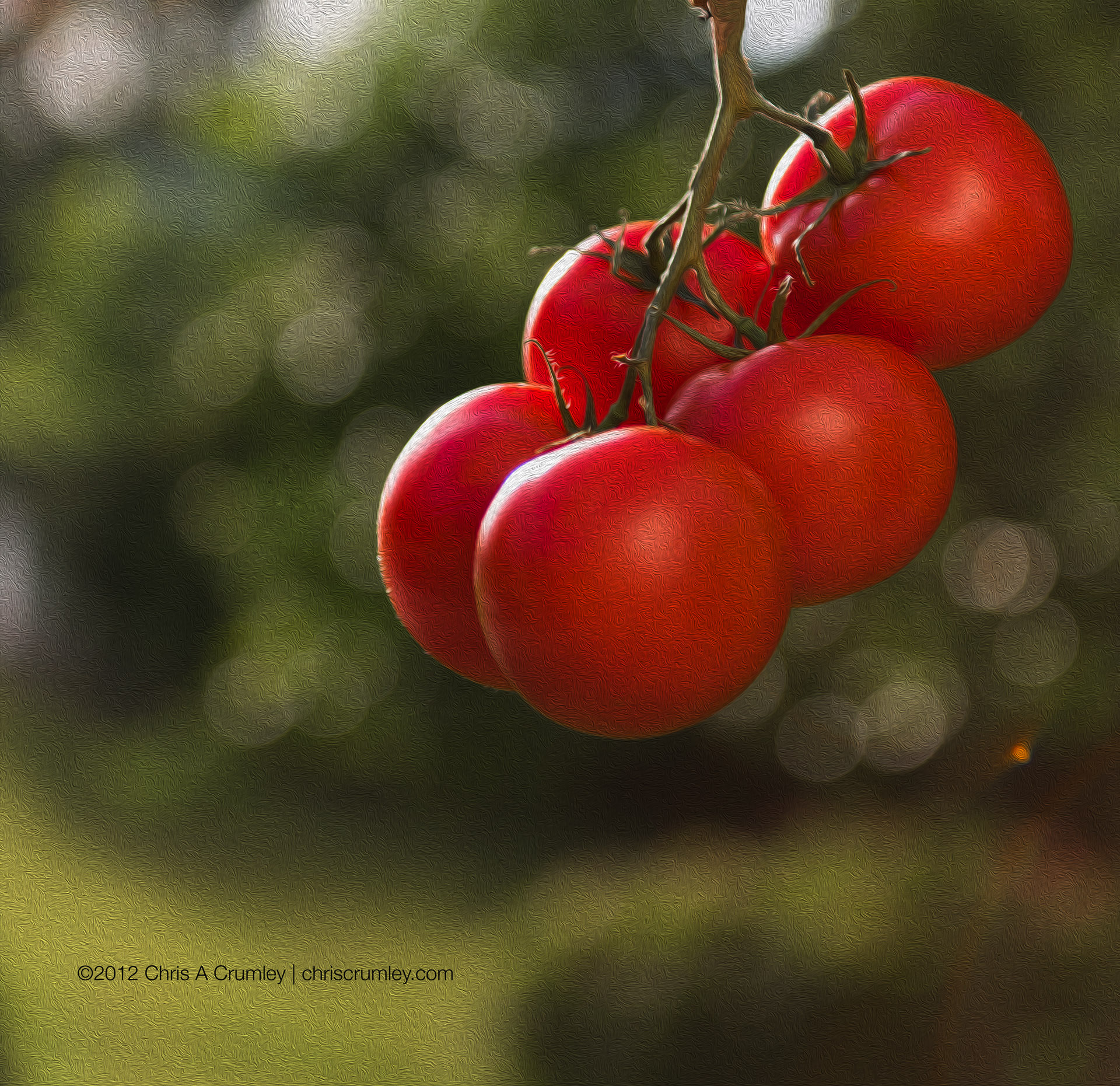 Red Period - Tomatoes