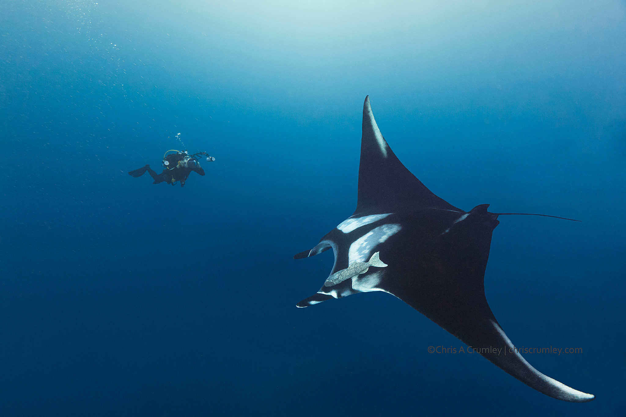 Diving with Mantas, Socorro Islands