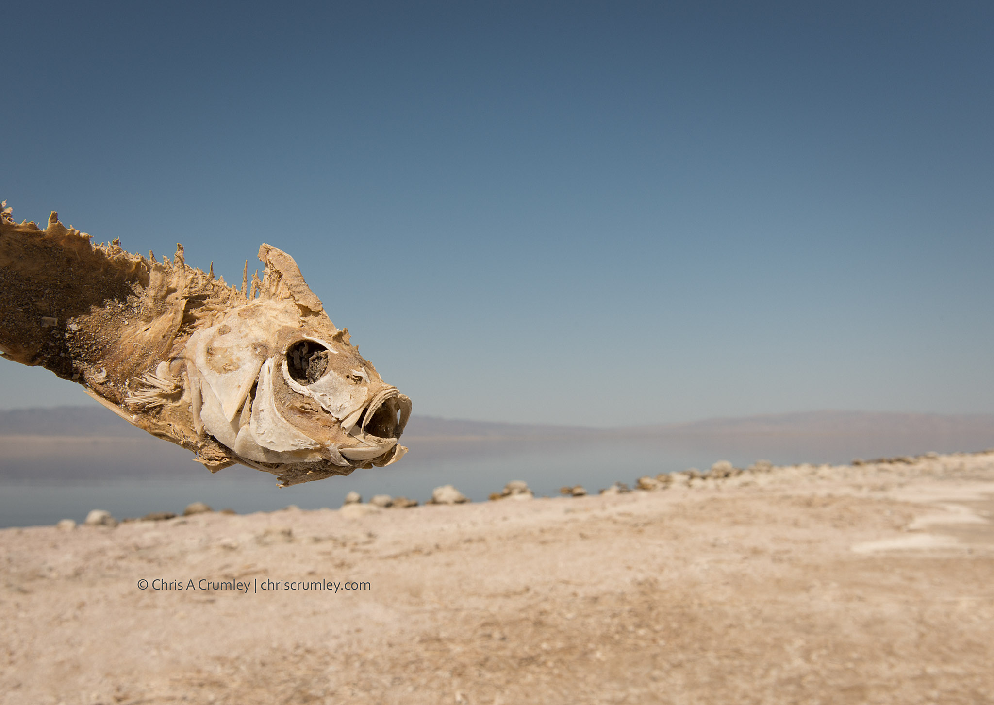 Dead Fish - Salton Sea, CA