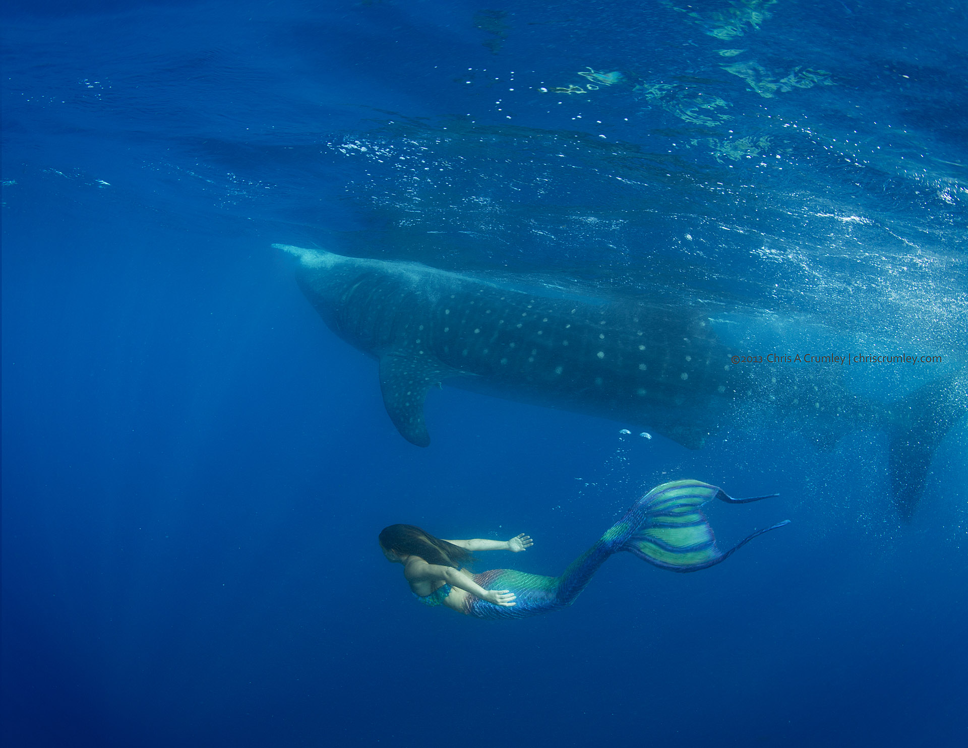 Mermaid Swims with a Whale Shark