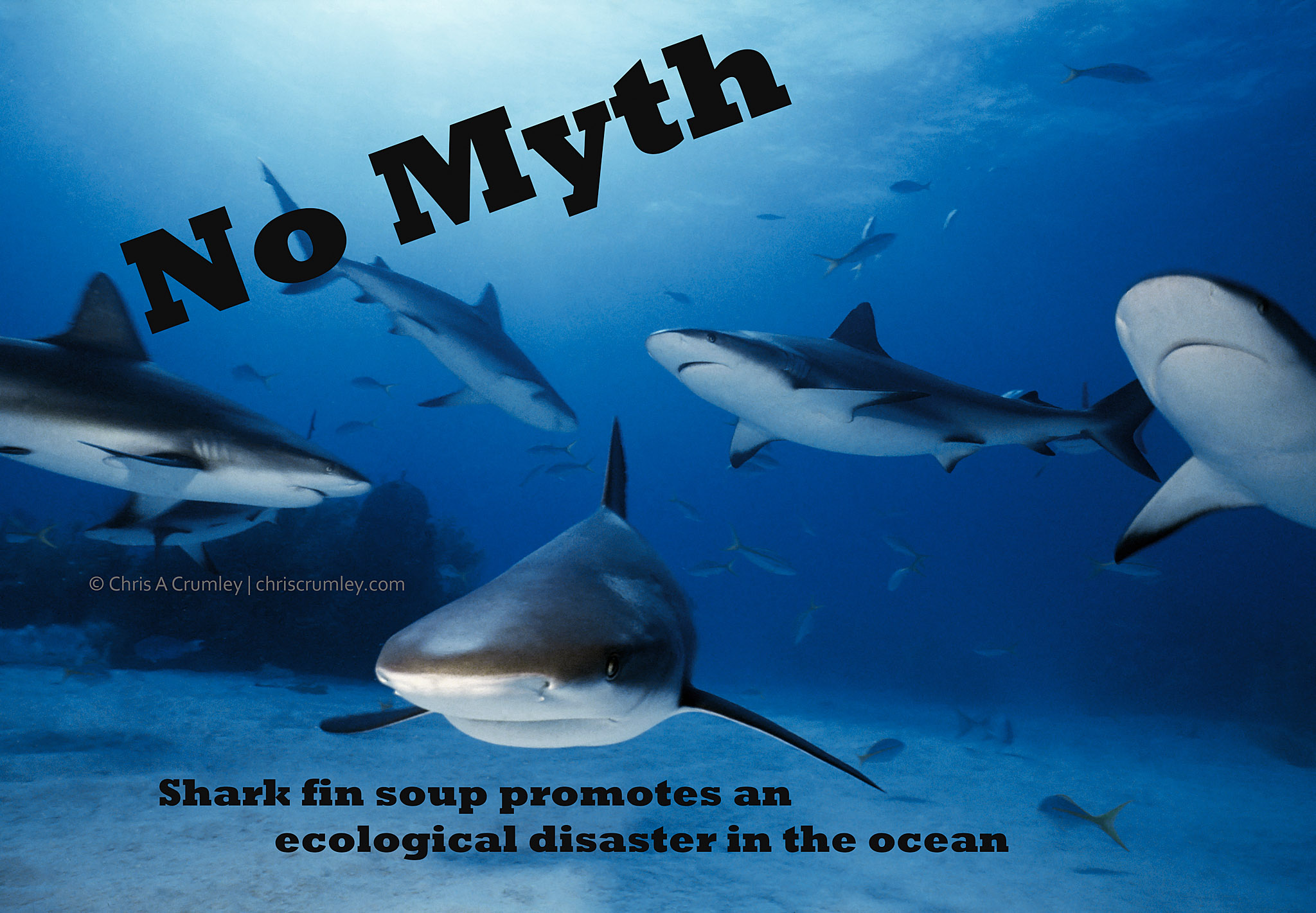 No Myth; Sharks