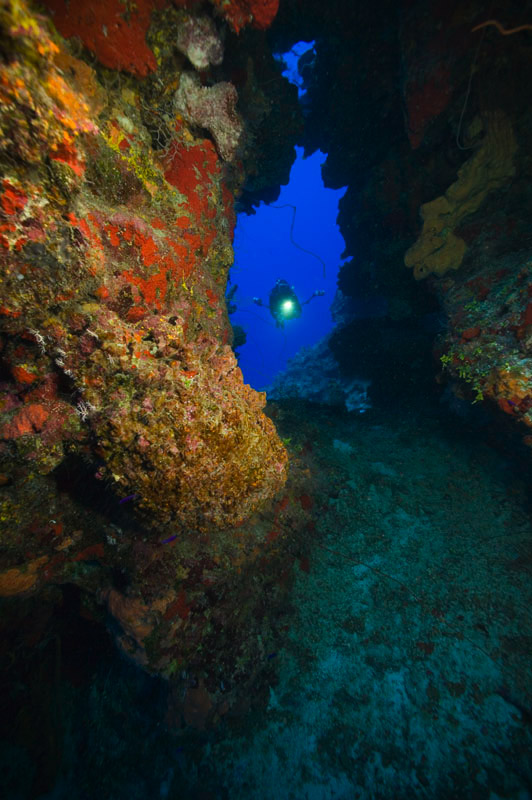 Neptune's Wall - Grand Cayman