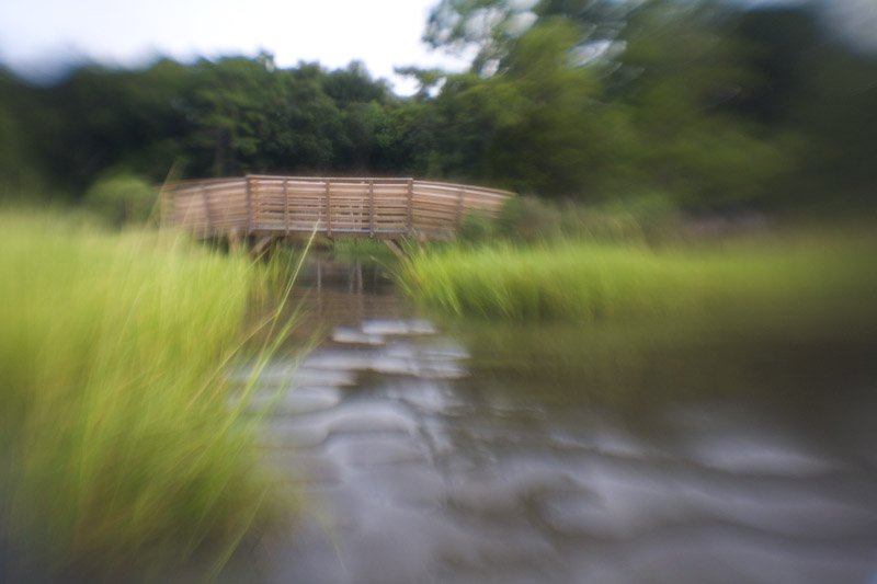 Footbridge over marsh grass