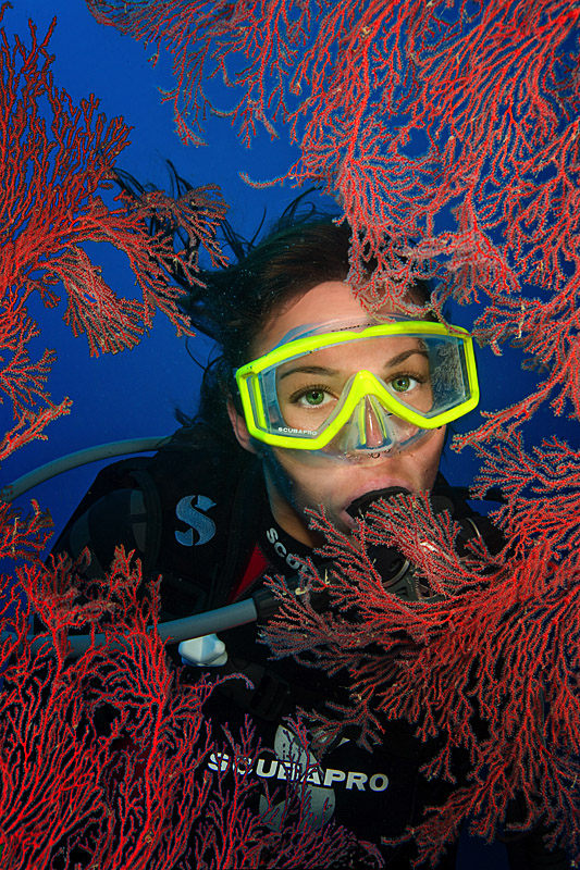 Diver and Gorgonian Fan - Palau, Micronesia
