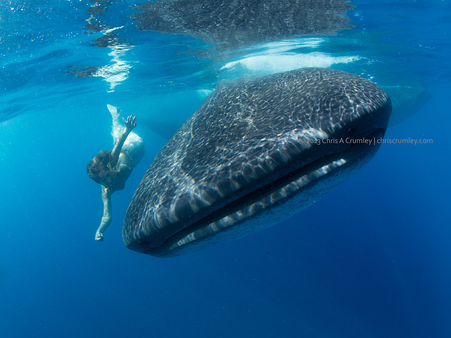 Mermaid Sydney Raye Smith and the Whale Shark